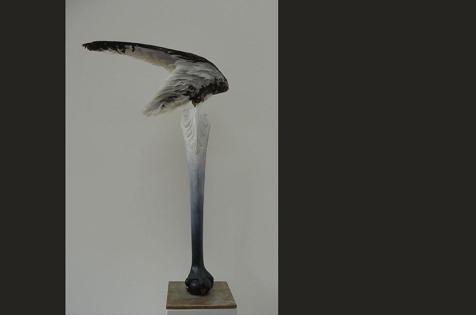 vleugel-meeuw.jpg